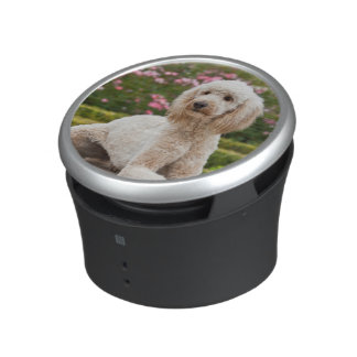 USA, California. Labradoodle Lying By Fountain Speaker