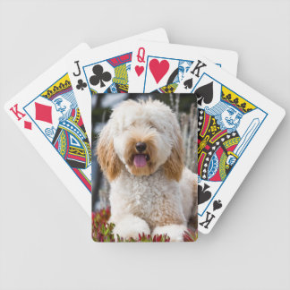 USA, California. Labradoodle Lying In Ice Plant Bicycle Playing Cards