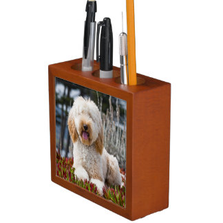 USA, California. Labradoodle Lying In Ice Plant Desk Organiser