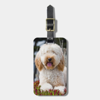 USA, California. Labradoodle Lying In Ice Plant Luggage Tag