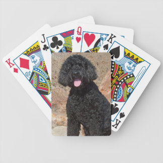 USA, California. Labradoodle Sitting Bicycle Playing Cards