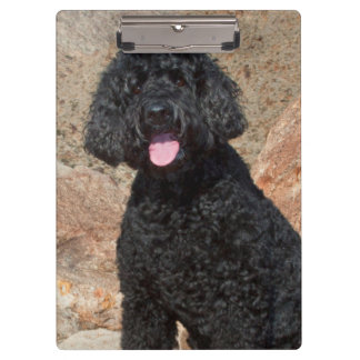 USA, California. Labradoodle Sitting Clipboard