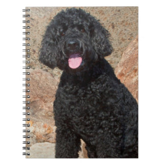 USA, California. Labradoodle Sitting Notebooks