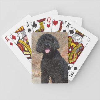 USA, California. Labradoodle Sitting Poker Deck