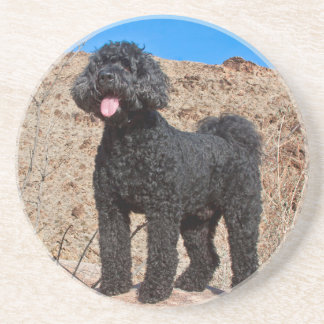 USA, California. Labradoodle Standing Coaster