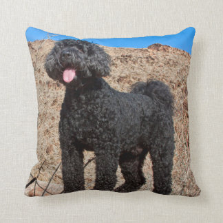 USA, California. Labradoodle Standing Cushion