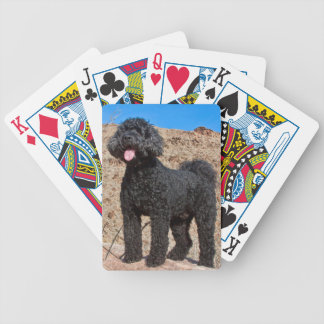 USA, California. Labradoodle Standing Poker Deck