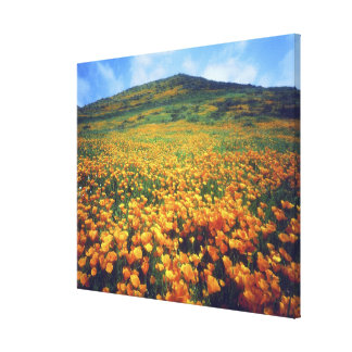 USA, California, Lake Elsinore. California Stretched Canvas Print