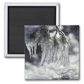 USA, California, Lake Tahoe. Icicles over Square Magnet