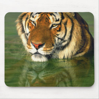 USA, California, Los Angeles County. Bengal Mouse Pad
