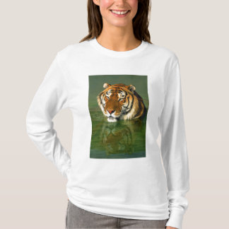 USA, California, Los Angeles County. Bengal T-Shirt