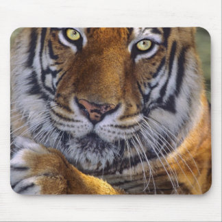 USA, California, Los Angeles County. Portrait 4 Mouse Pad