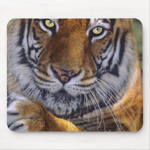 USA, California, Los Angeles County. Portrait 4 Mouse Pads
