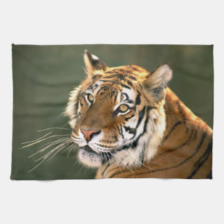 USA, California, Los Angeles County. Portrait 5 Tea Towel