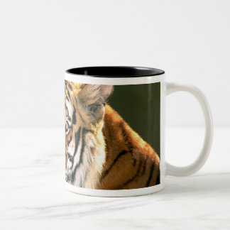USA, California, Los Angeles County. Portrait 5 Two-Tone Coffee Mug