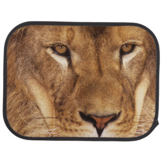 USA, California, Los Angeles County. Portrait Car Mat