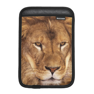 USA, California, Los Angeles County. Portrait iPad Mini Sleeve