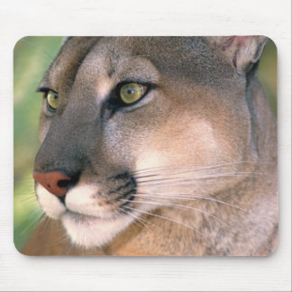 USA, California, Los Angeles County. Portrait of Mouse Pads