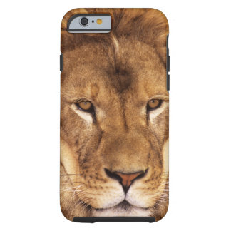 USA, California, Los Angeles County. Portrait Tough iPhone 6 Case