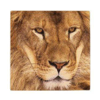 USA, California, Los Angeles County. Portrait Wood Coaster