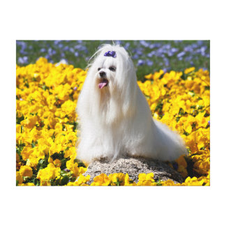 USA, California. Maltese In Yellow Flowers Canvas Print