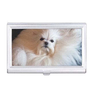 USA, California. Maltese Lying Down Business Card Holder