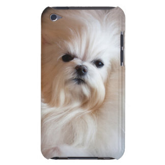 USA, California. Maltese Lying Down iPod Touch Covers