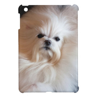 USA, California. Maltese Lying Down iPad Mini Cover
