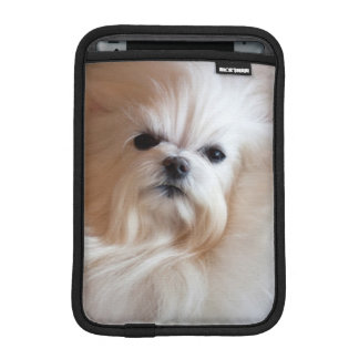 USA, California. Maltese Lying Down iPad Mini Sleeve