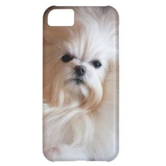 USA, California. Maltese Lying Down iPhone 5C Case