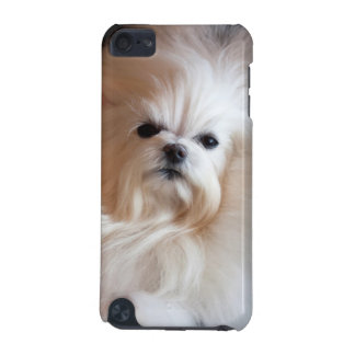 USA, California. Maltese Lying Down iPod Touch 5G Case