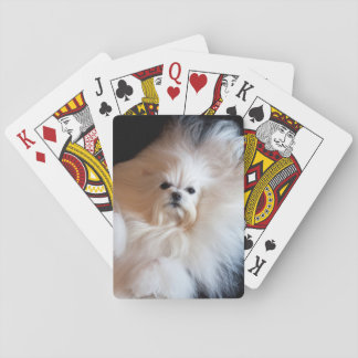 USA, California. Maltese Lying Down Playing Cards