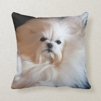USA, California. Maltese Lying Down Throw Pillow