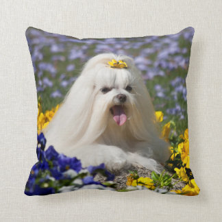 USA, California. Maltese Lying In Flowers Cushion
