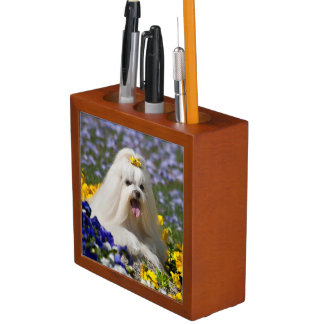 USA, California. Maltese Lying In Flowers Desk Organiser