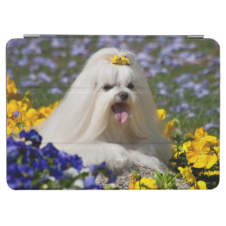 USA, California. Maltese Lying In Flowers iPad Air Cover