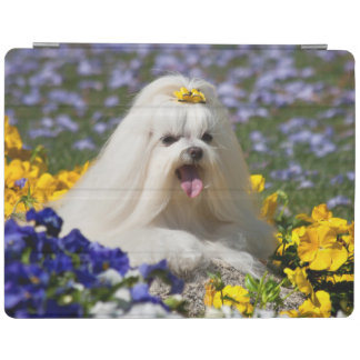 USA, California. Maltese Lying In Flowers iPad Cover