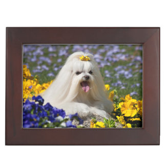 USA, California. Maltese Lying In Flowers Keepsake Box