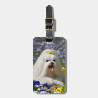 USA, California. Maltese Lying In Flowers Luggage Tag