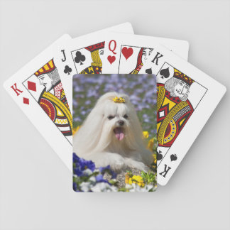 USA, California. Maltese Lying In Flowers Playing Cards