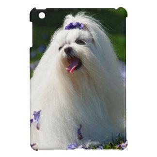 USA, California. Maltese Posing In Purple Case For The iPad Mini