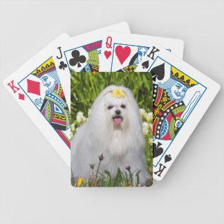 USA, California. Maltese Sitting Poker Deck