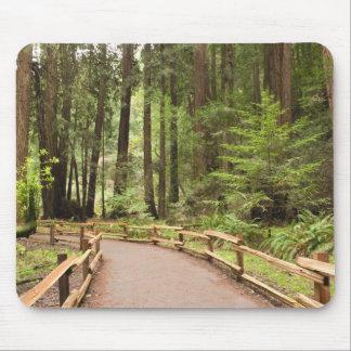 USA, California, Marin County, Muir Woods Mouse Mat