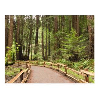USA, California, Marin County, Muir Woods Postcard