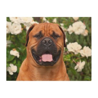 USA, California. Mastiff In Front Of White Roses Wood Print