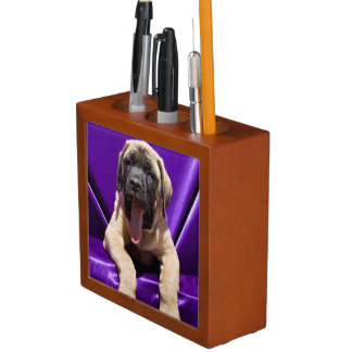 USA, California. Mastiff Puppy In Purple Desk Organiser