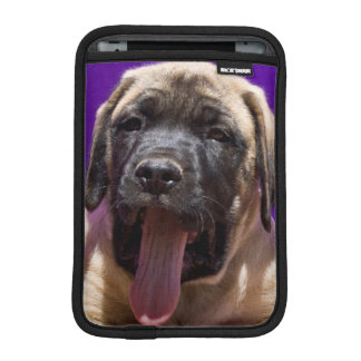 USA, California. Mastiff Puppy In Purple iPad Mini Sleeve