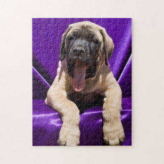 USA, California. Mastiff Puppy In Purple Jigsaw Puzzle