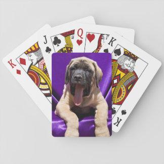 USA, California. Mastiff Puppy In Purple Poker Deck