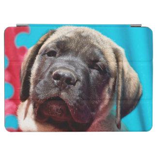 USA, California. Mastiff Puppy Looking At You iPad Air Cover